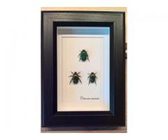 Uokvireni kukci (okvir, slika), ručni rad