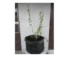 Vrece od agrotekstila - za sadnju borovnica, ukrasnog bilja i voca