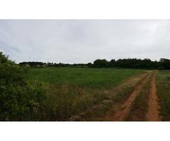 Poljoprivredno zemljište