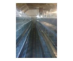 Proizvodnja i prodaja kaveza za koke nosilje