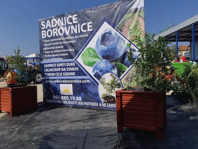 Agrimatiko Borovnica